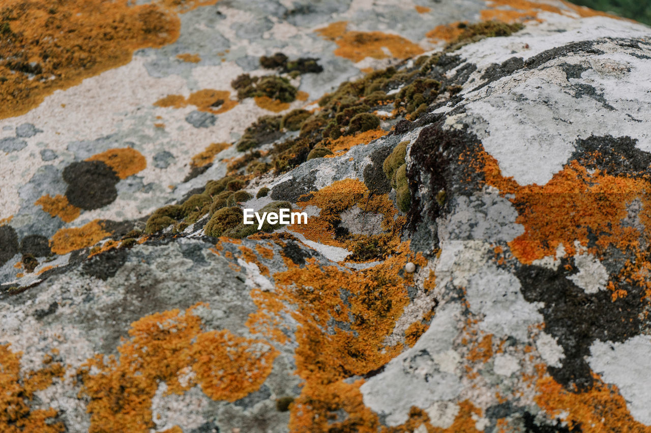 rock - object, rock, solid, no people, lichen, close-up, textured, day, nature, outdoors, full frame, rock formation, rough, backgrounds, pattern, geology, granite, land, focus on foreground, mountain