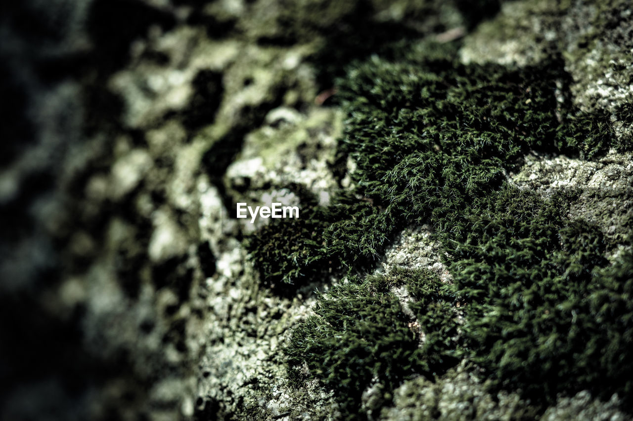 selective focus, moss, textured, close-up, nature, growth, no people, lichen, day, tree, fungus, beauty in nature, outdoors