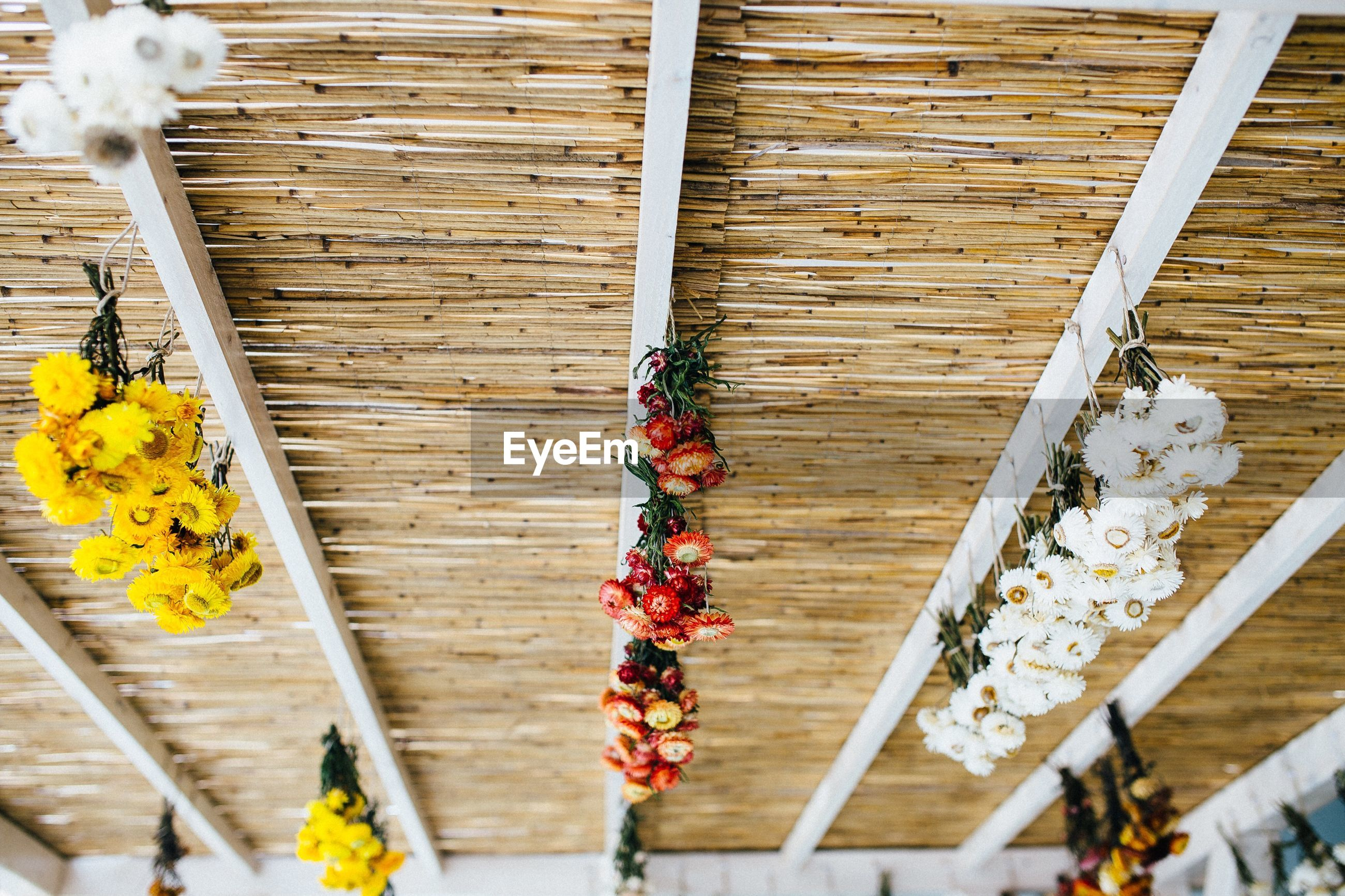 Low angle view of various colorful flowers on wooden ceiling