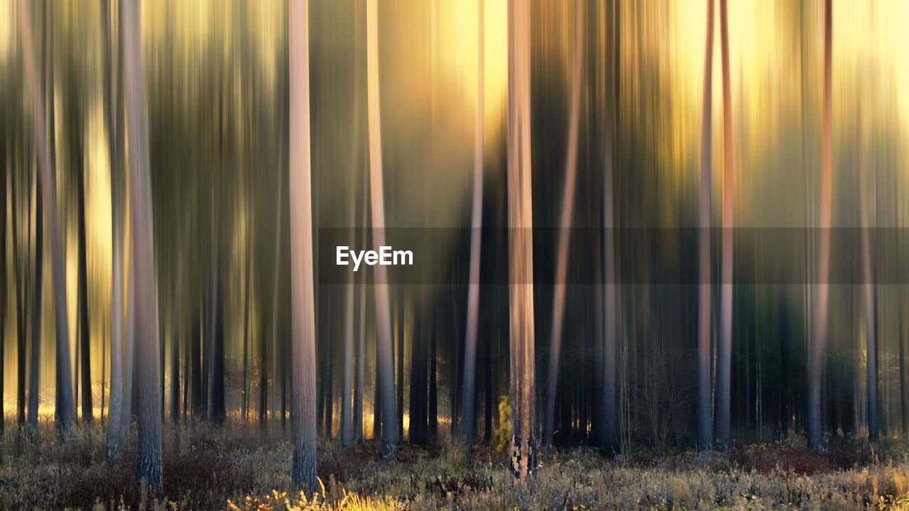 no people, land, forest, nature, day, plant, sunlight, tranquility, beauty in nature, motion, tree, outdoors, long exposure, field, scenics - nature, sunset, sunbeam, growth, blurred motion, full frame, bamboo - plant