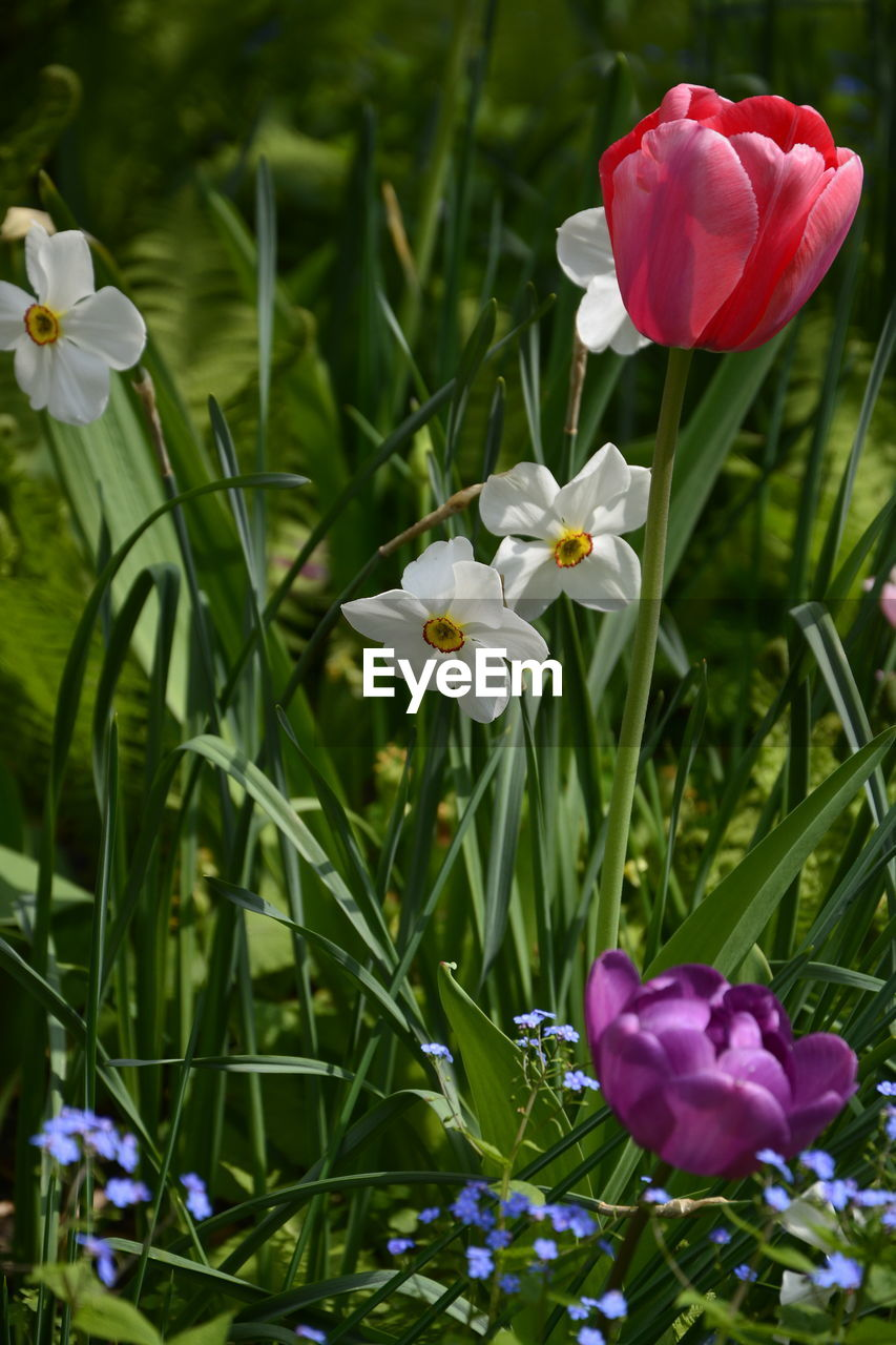 flower, petal, growth, nature, beauty in nature, freshness, fragility, flower head, blooming, plant, no people, field, outdoors, day, close-up, grass, crocus