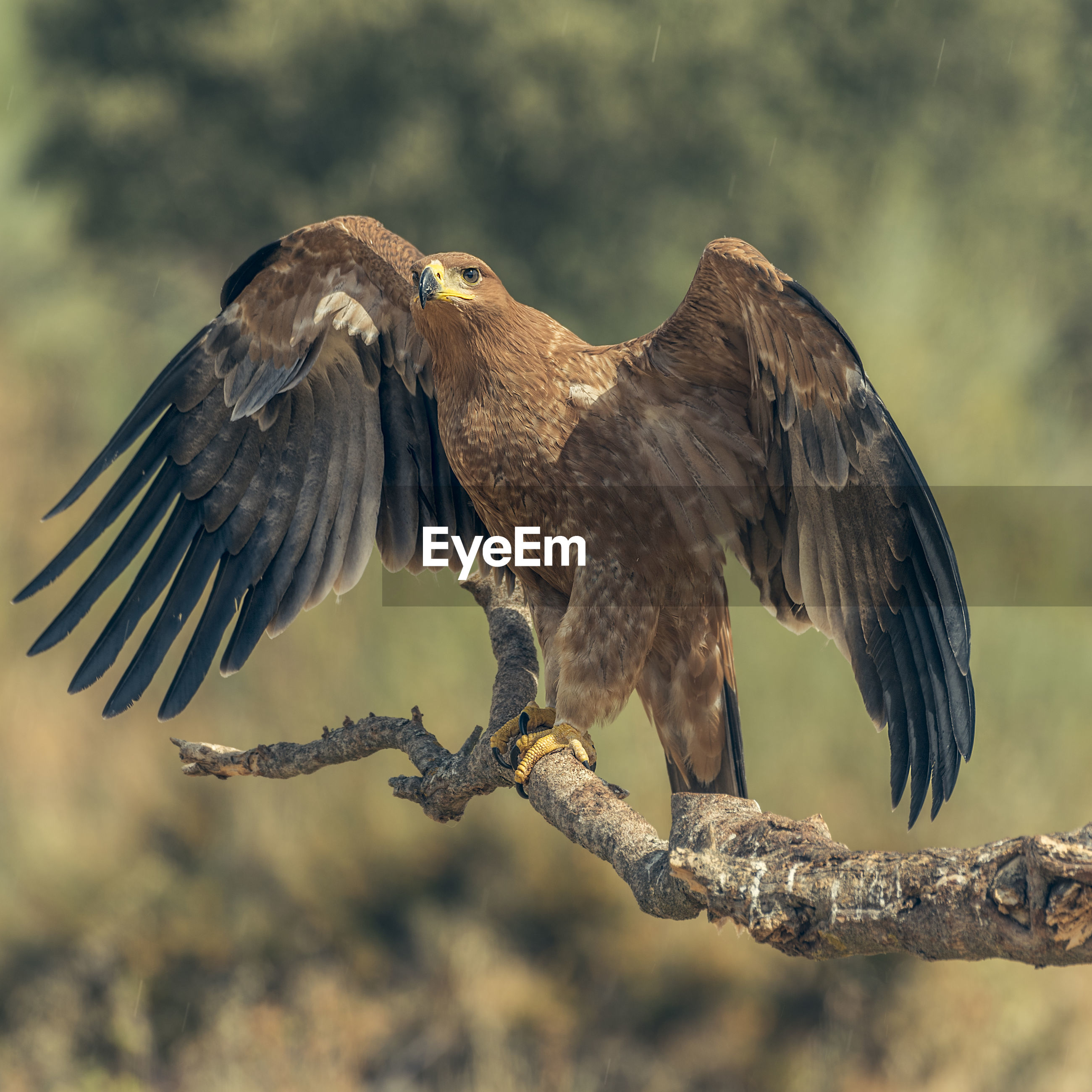 Close-up of eagle on branch