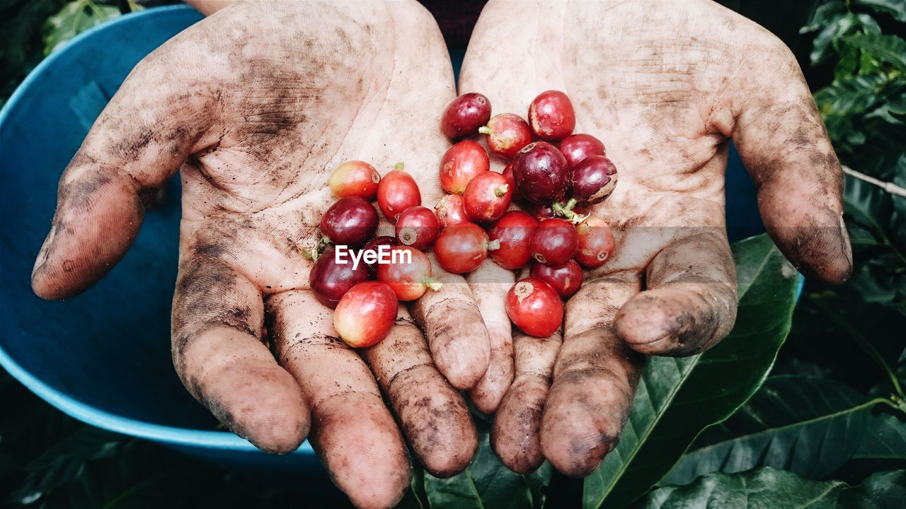 Close-Up Of Hand Holding Coffee Fruit