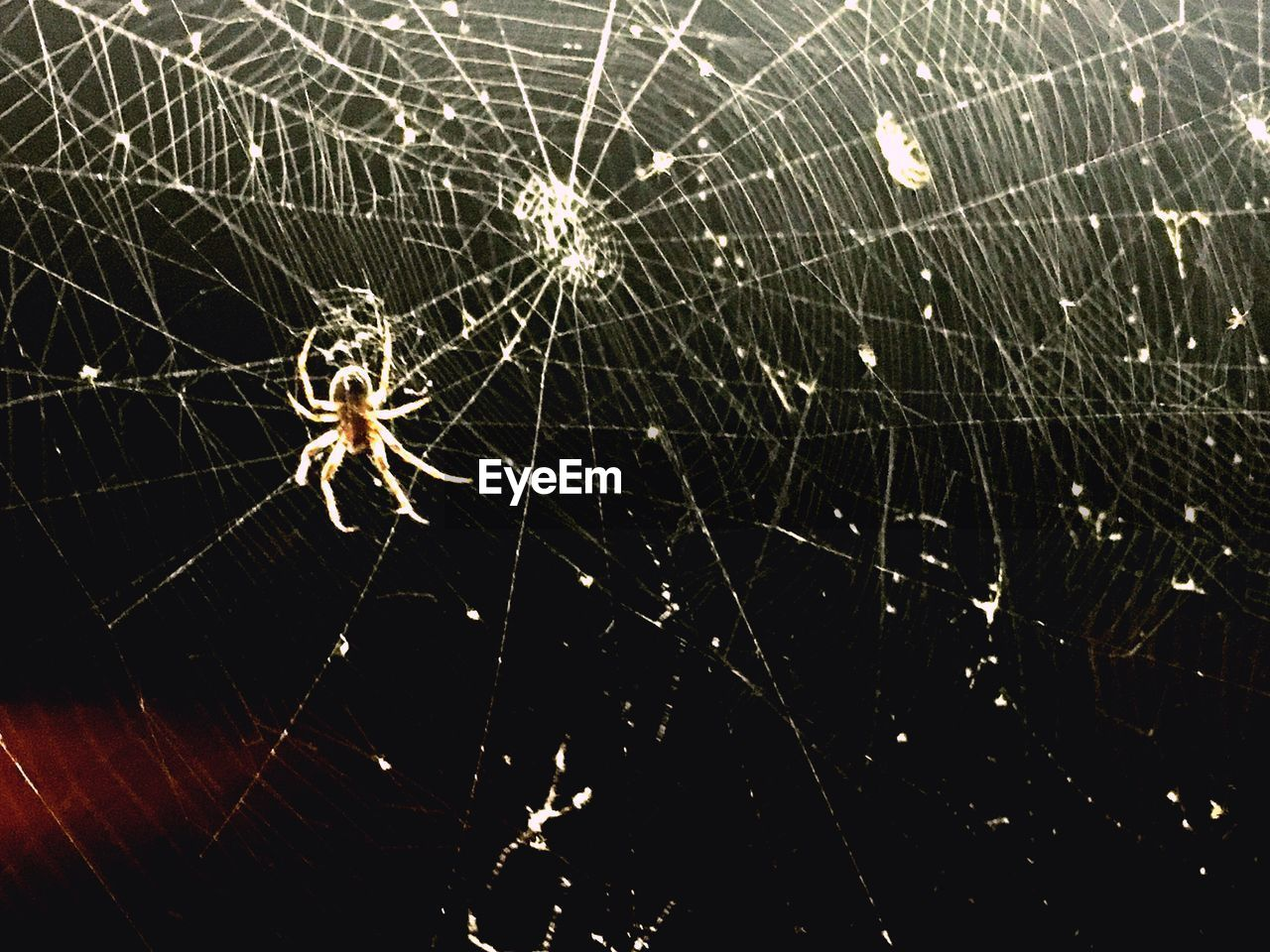 spider web, spider, one animal, web, animal themes, survival, animals in the wild, insect, animal leg, close-up, fragility, nature, animal wildlife, no people, focus on foreground, outdoors, day, full length
