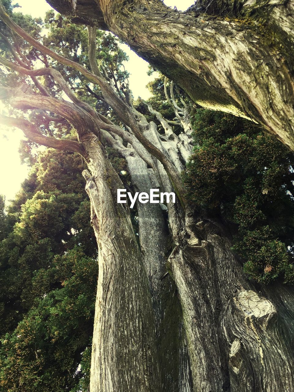 tree, tree trunk, nature, forest, growth, day, tranquility, no people, beauty in nature, tranquil scene, outdoors, branch, scenics, close-up