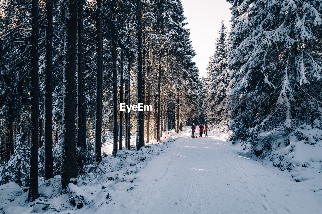 snow, winter, tree, cold temperature, plant, rear view, land, one person, nature, forest, beauty in nature, day, full length, real people, leisure activity, lifestyles, scenics - nature, walking, covering, the way forward, outdoors, warm clothing, woodland