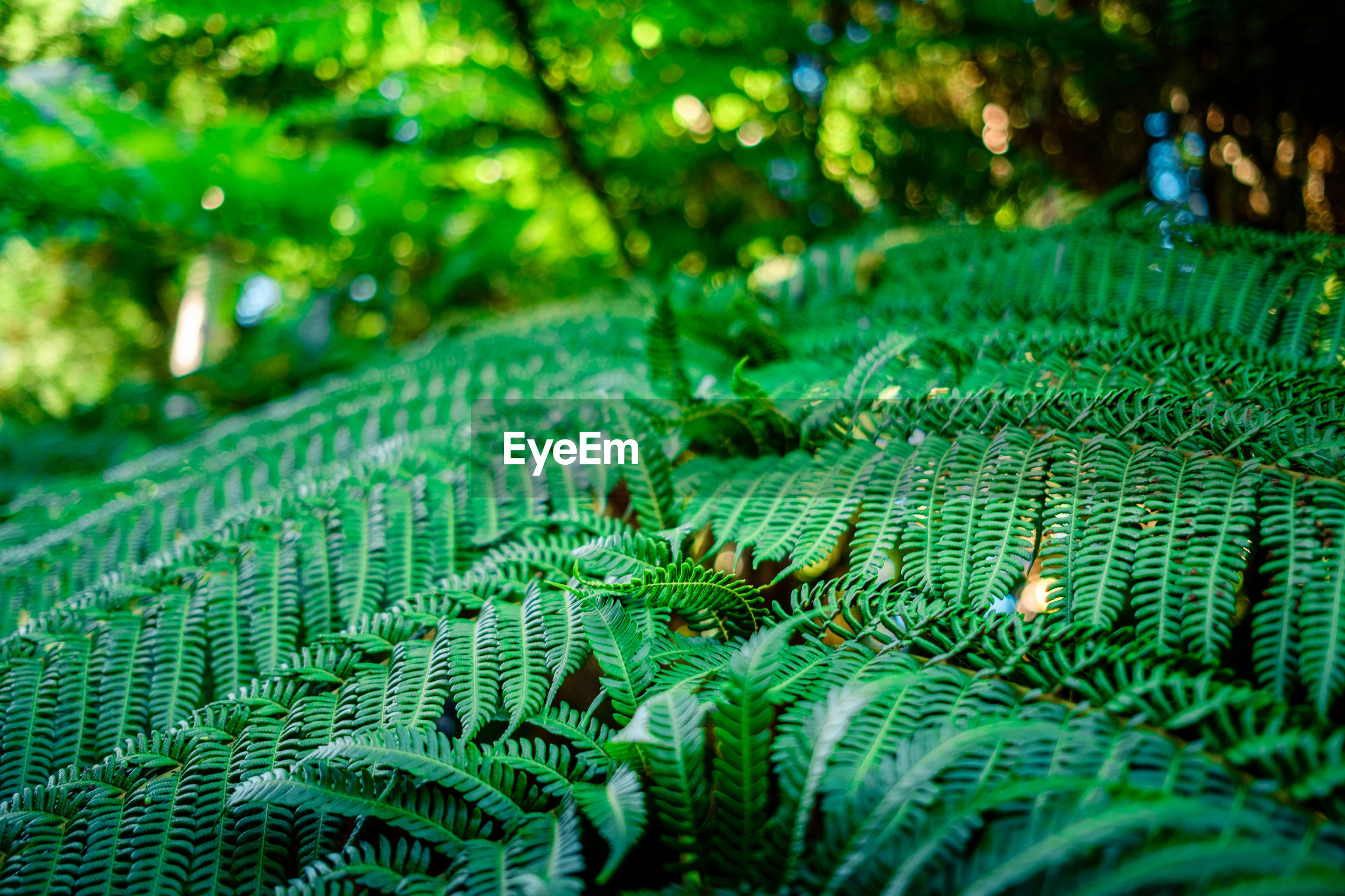 CLOSE-UP OF FERN AMIDST PLANTS IN FOREST