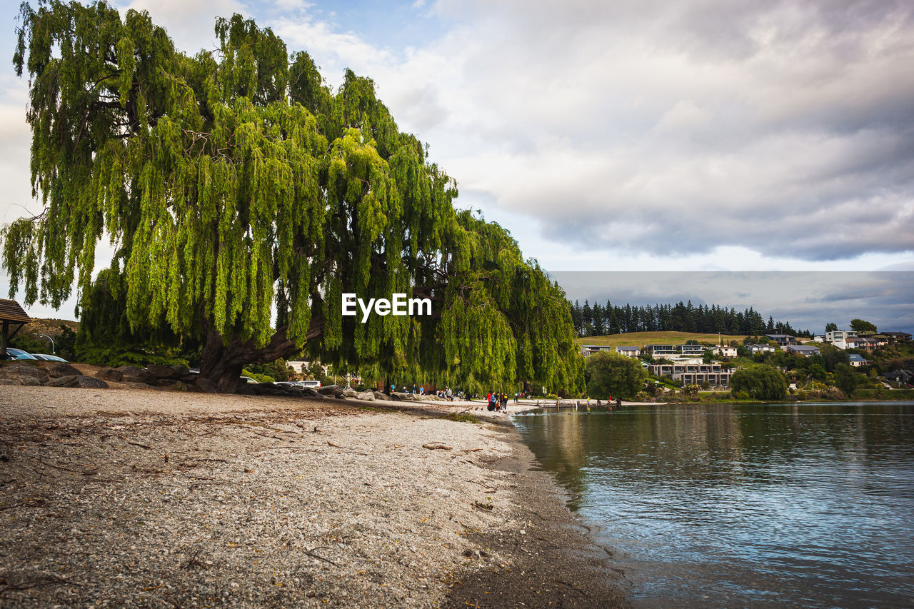tree, water, plant, cloud - sky, sky, beauty in nature, scenics - nature, tranquility, tranquil scene, nature, day, river, growth, non-urban scene, waterfront, land, transportation, green color, nautical vessel, no people