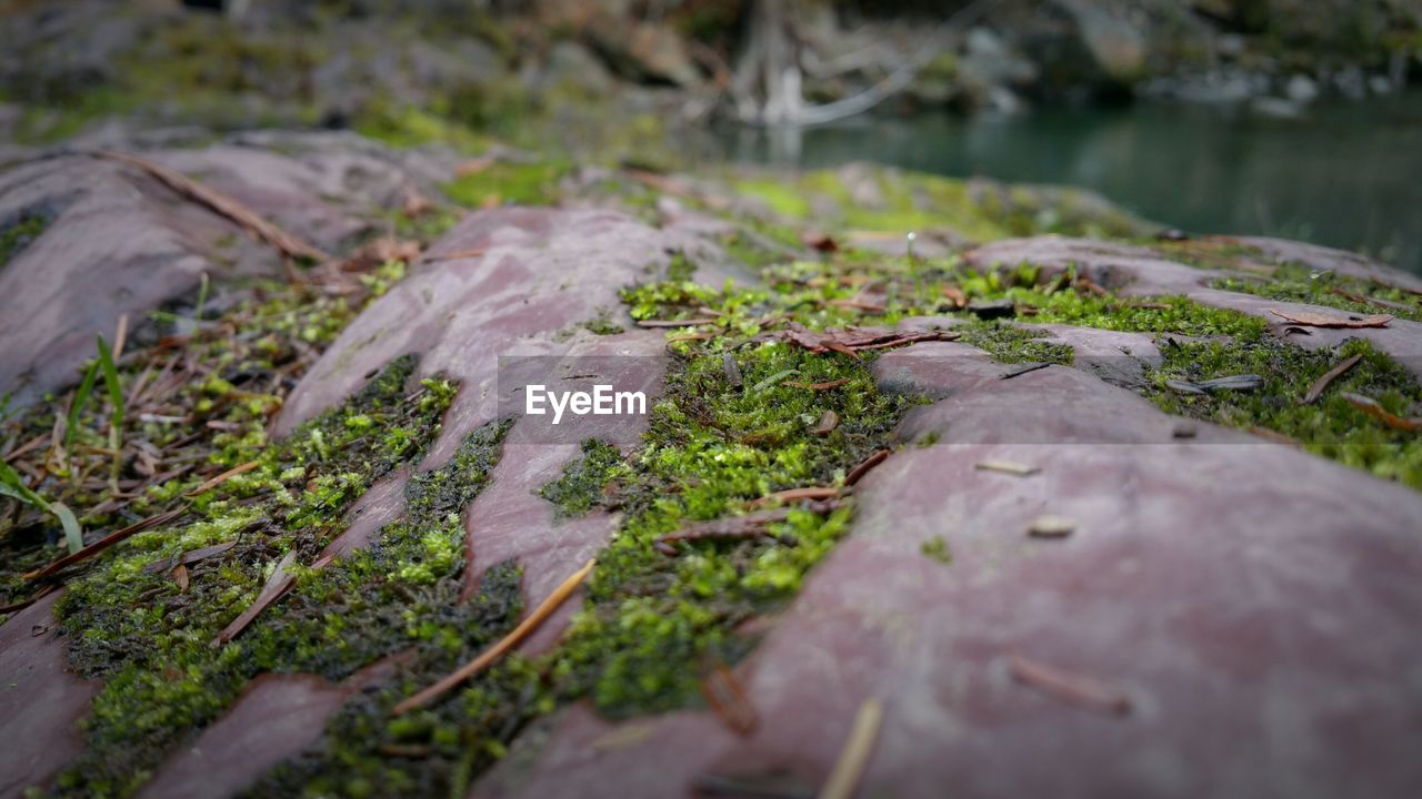 nature, selective focus, outdoors, no people, rock - object, day, moss, close-up, water, beauty in nature, freshness