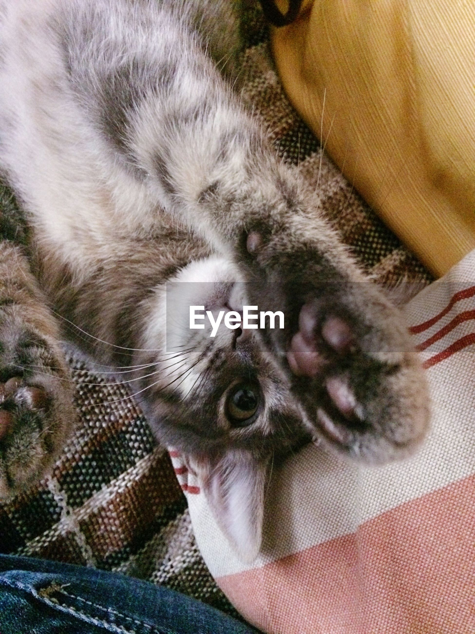 pets, domestic cat, one animal, animal themes, domestic animals, mammal, indoors, lying down, high angle view, feline, whisker, one person, looking at camera, portrait, relaxation, young animal, bed, kitten, day, close-up, people, only men