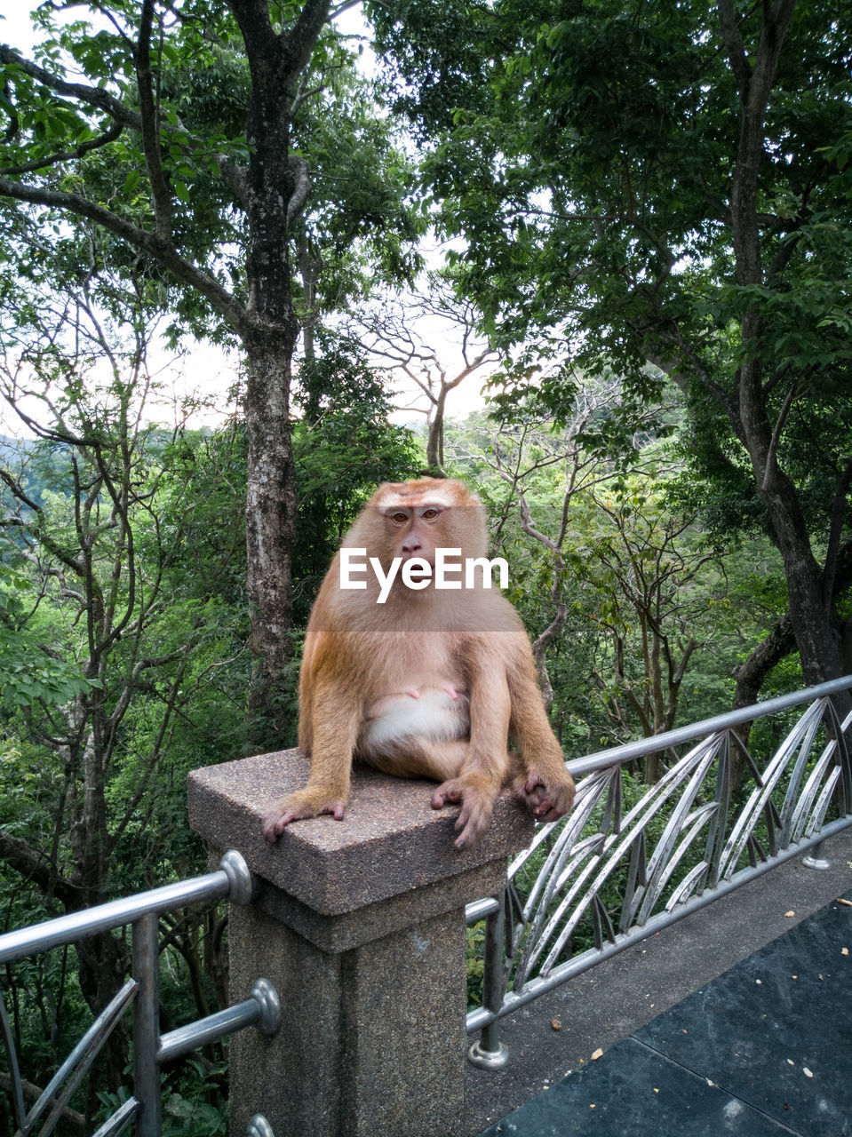 tree, primate, plant, animal wildlife, mammal, animals in the wild, railing, vertebrate, one animal, nature, forest, no people, sitting, day, branch, full length, baboon