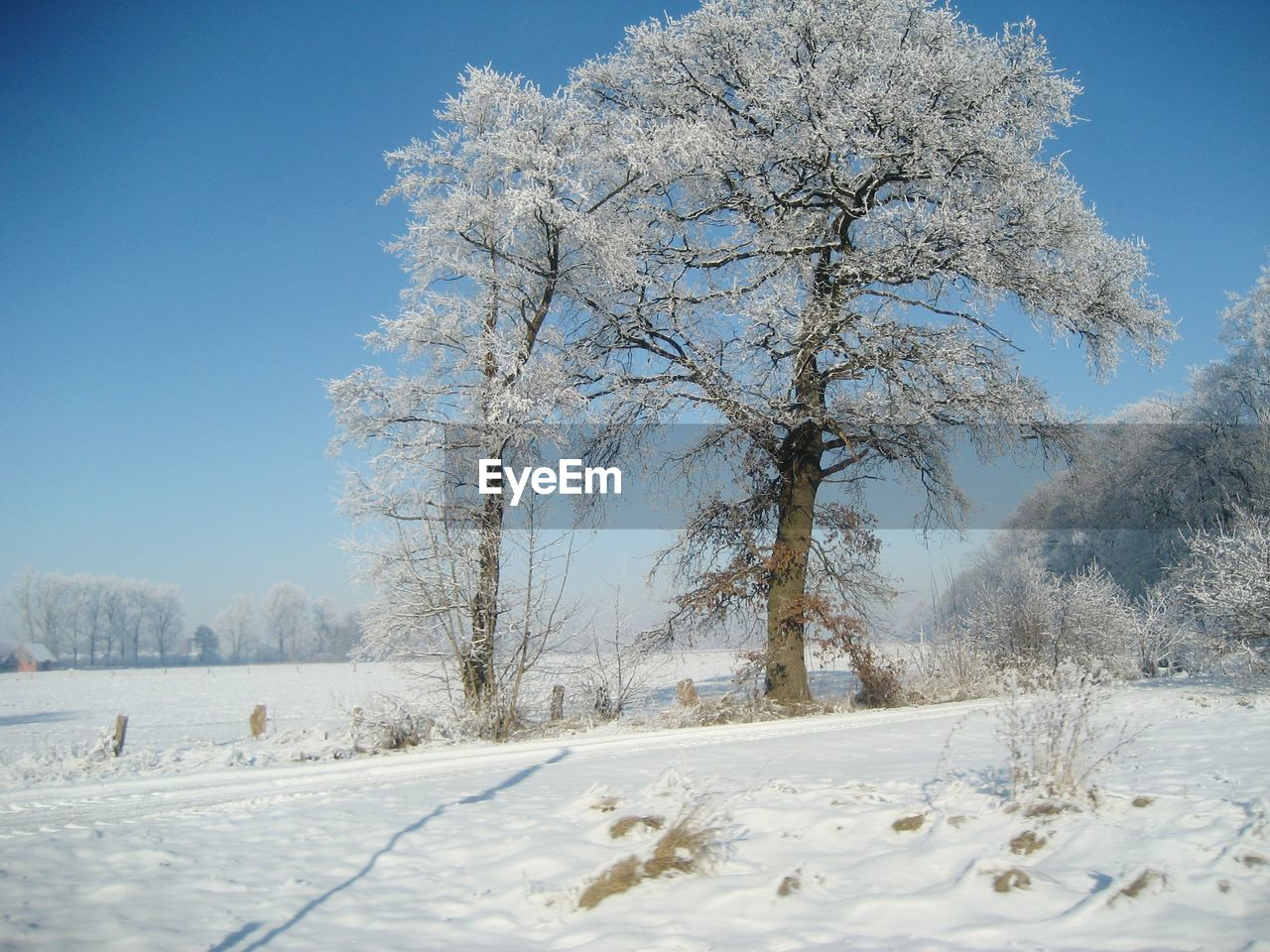 snow, cold temperature, winter, tree, plant, sky, beauty in nature, white color, scenics - nature, covering, nature, tranquility, field, no people, frozen, tranquil scene, bare tree, land, day, outdoors, cold, extreme weather, powder snow