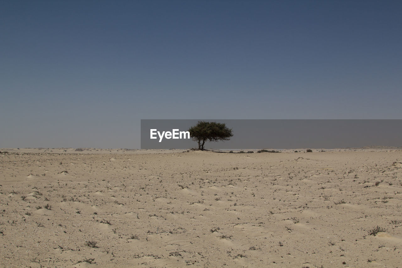 SCENIC VIEW OF TREE AGAINST CLEAR SKY