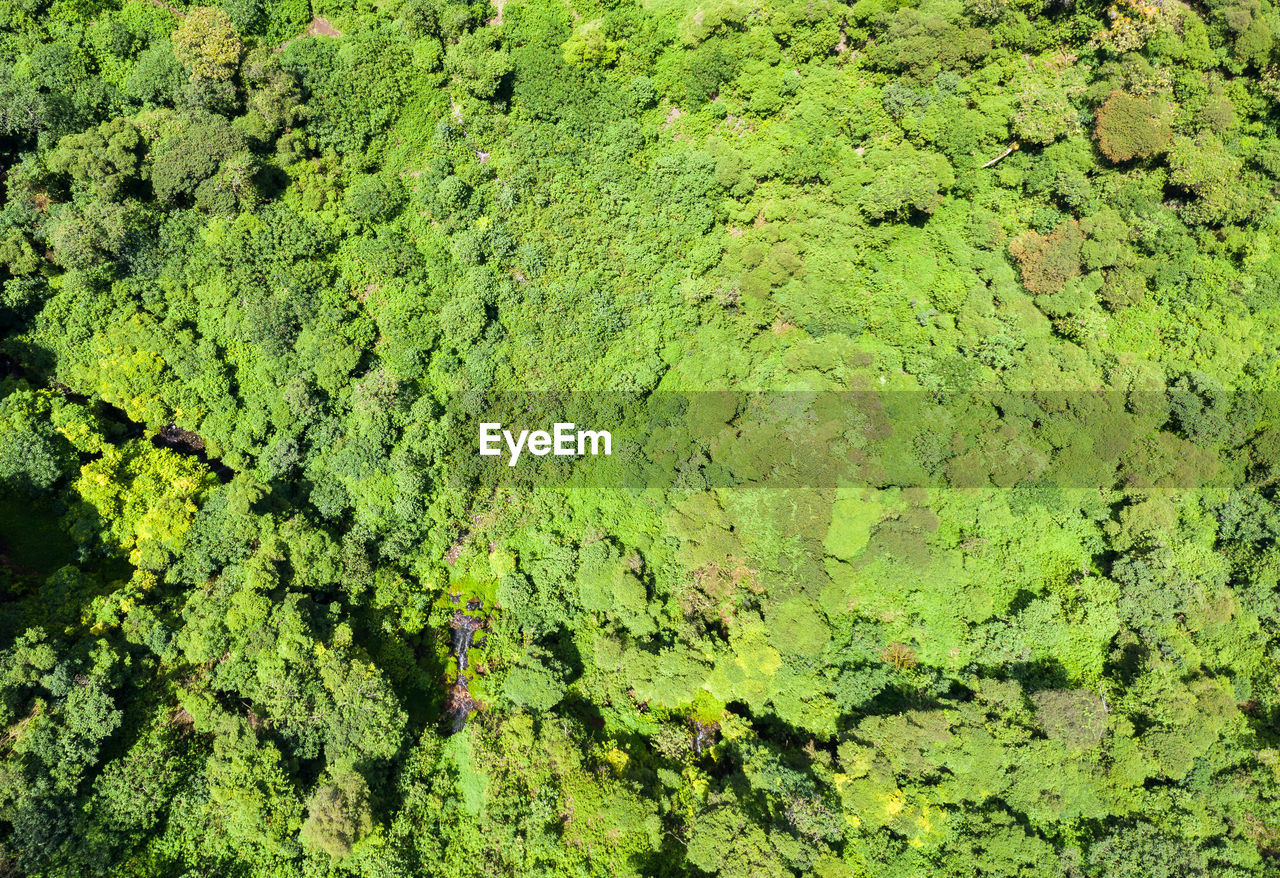 green color, full frame, backgrounds, no people, growth, plant, day, nature, high angle view, beauty in nature, tranquility, moss, land, foliage, outdoors, lush foliage, tree, environment, close-up, green