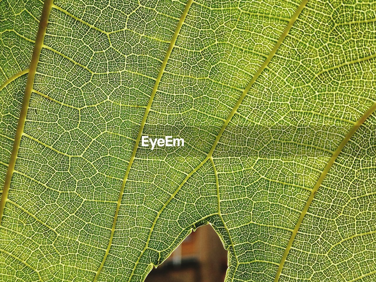 leaf, plant part, green color, close-up, backgrounds, full frame, leaf vein, nature, plant, natural pattern, no people, macro, beauty in nature, outdoors, extreme close-up, textured, growth, freshness, botany, fragility
