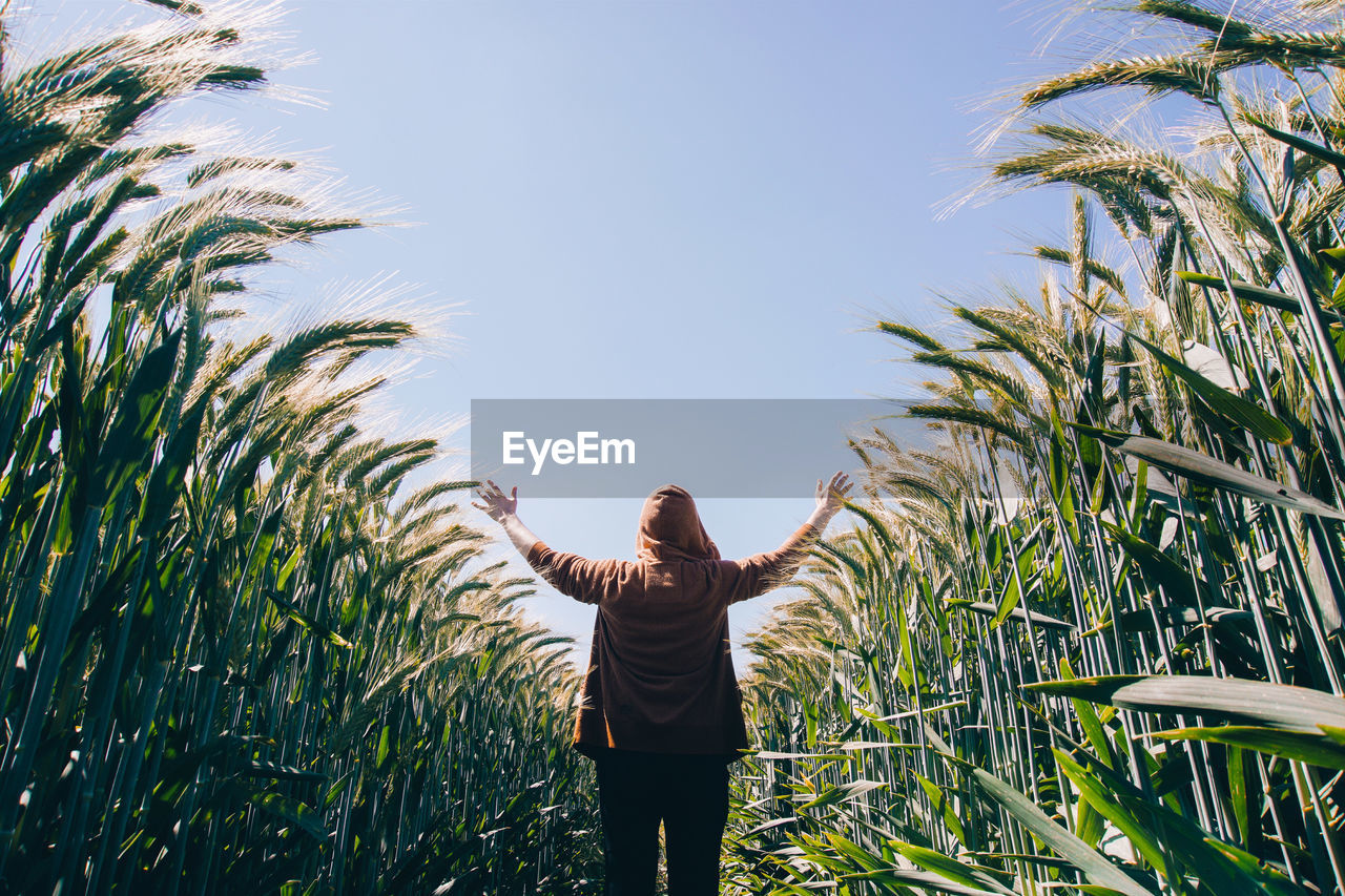 Rear View Of Person Standing Amidst Crops On Field Against Sky