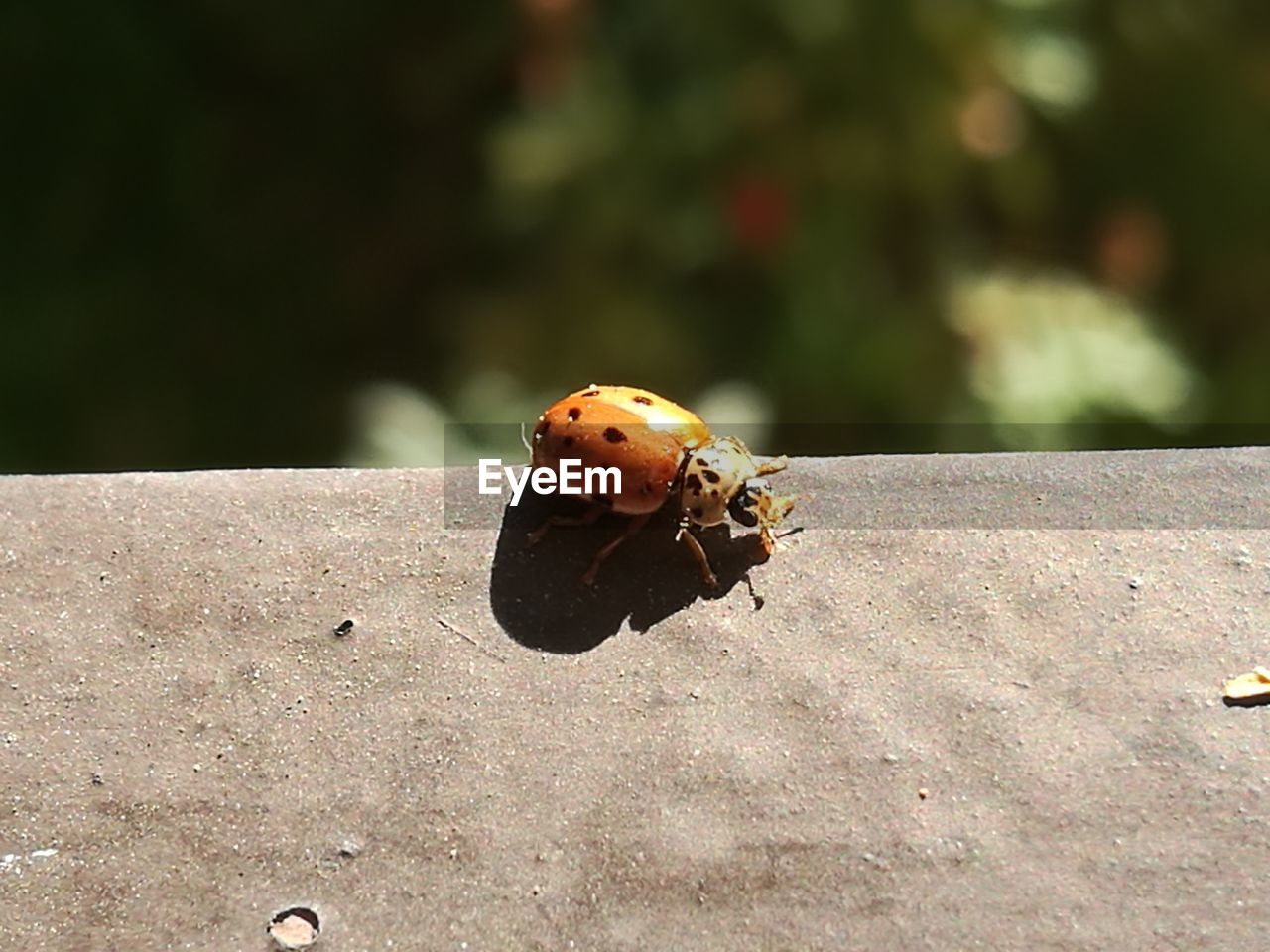 animal wildlife, animal themes, animal, animals in the wild, invertebrate, one animal, insect, focus on foreground, ladybug, day, close-up, nature, beetle, no people, sunlight, outdoors, beauty in nature, spotted, plant, zoology, small