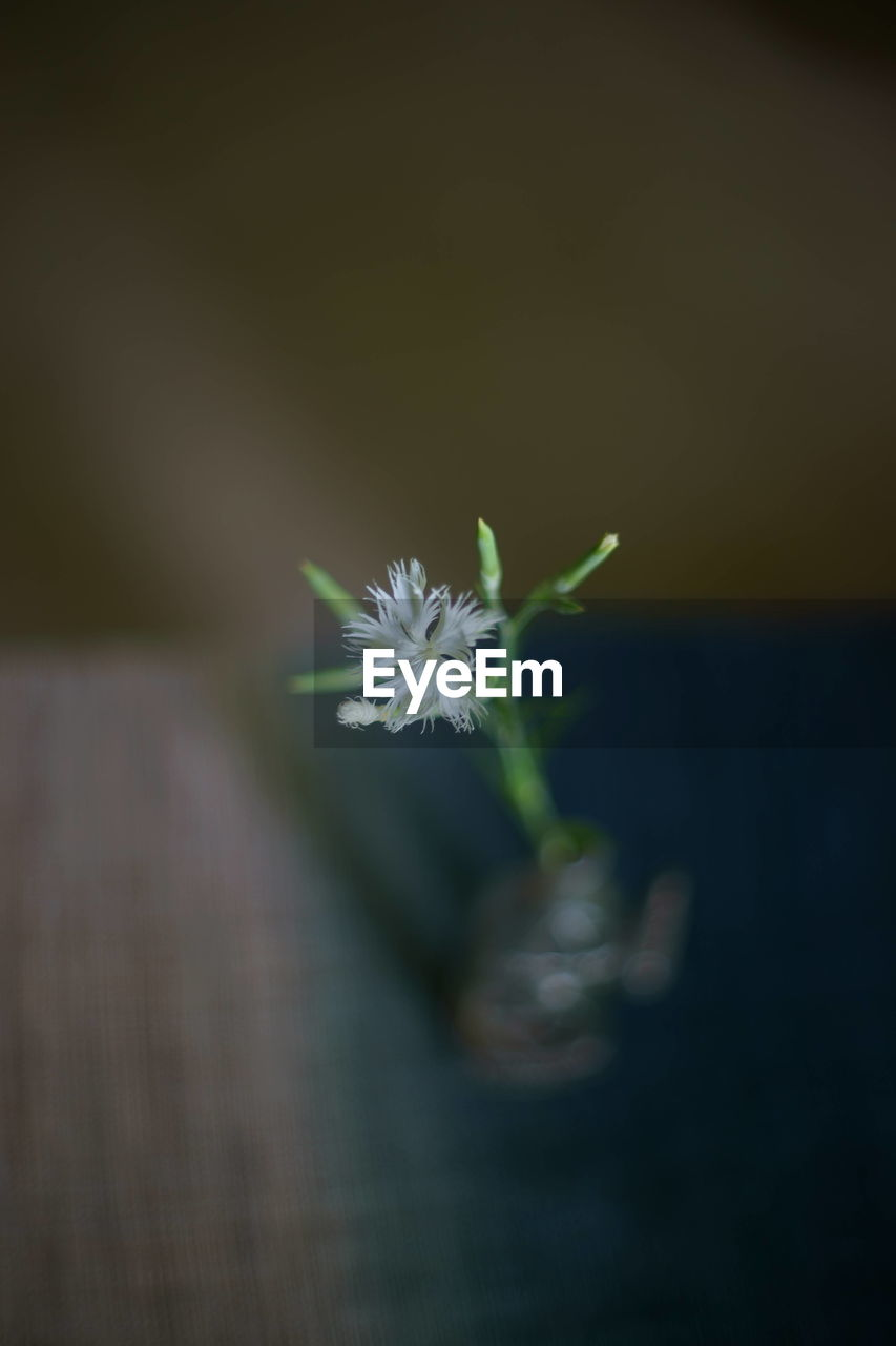 flower, growth, plant, nature, fragility, selective focus, beauty in nature, no people, freshness, close-up, flower head, outdoors, day