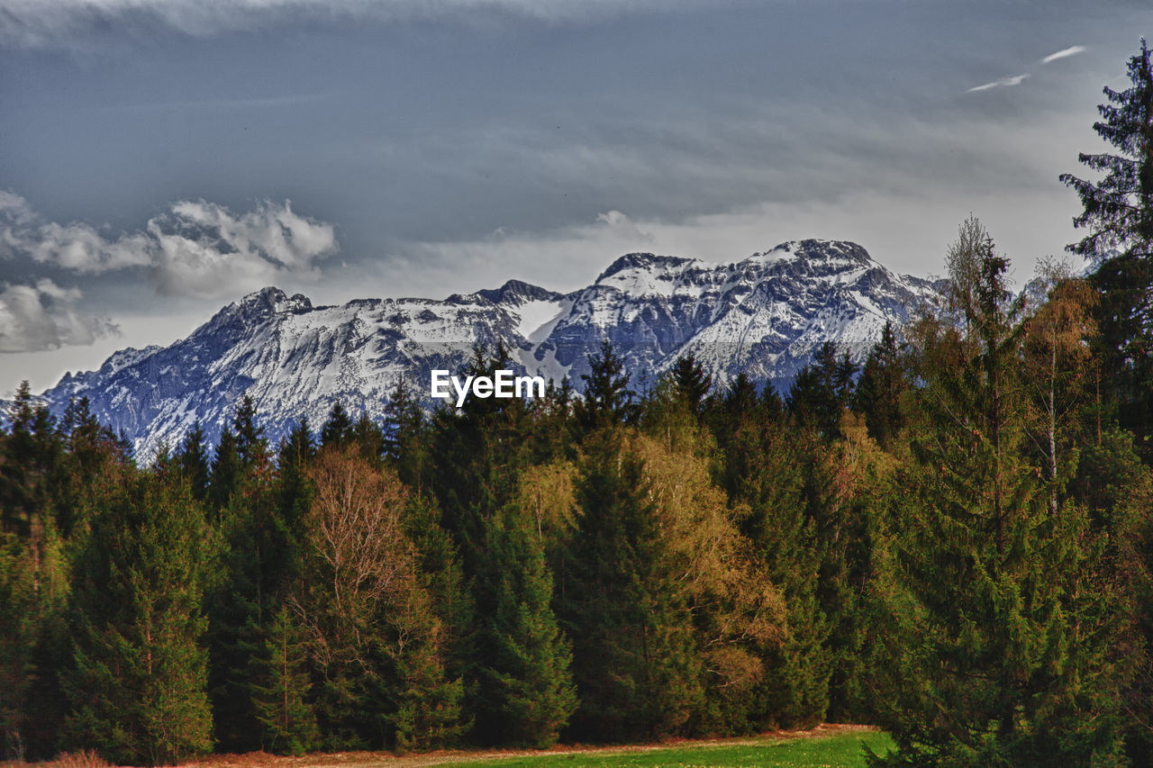 tree, mountain, beauty in nature, tranquil scene, scenics - nature, plant, tranquility, cold temperature, sky, snow, winter, non-urban scene, forest, environment, landscape, no people, growth, idyllic, nature, snowcapped mountain, woodland, pine tree, coniferous tree, mountain peak, range