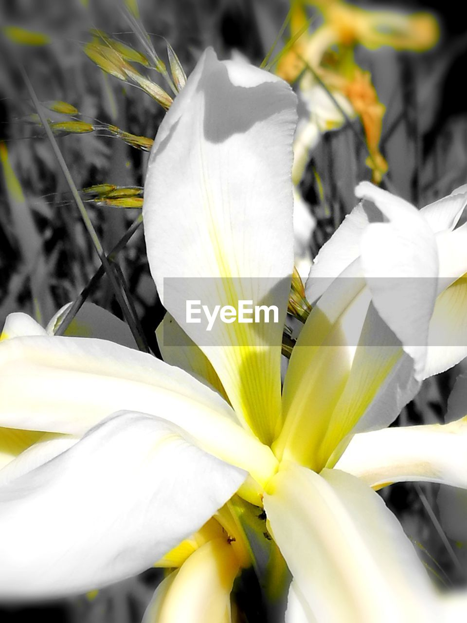 flower, petal, growth, flower head, fragility, nature, beauty in nature, white color, freshness, plant, close-up, no people, day, yellow, outdoors, blooming, animal themes