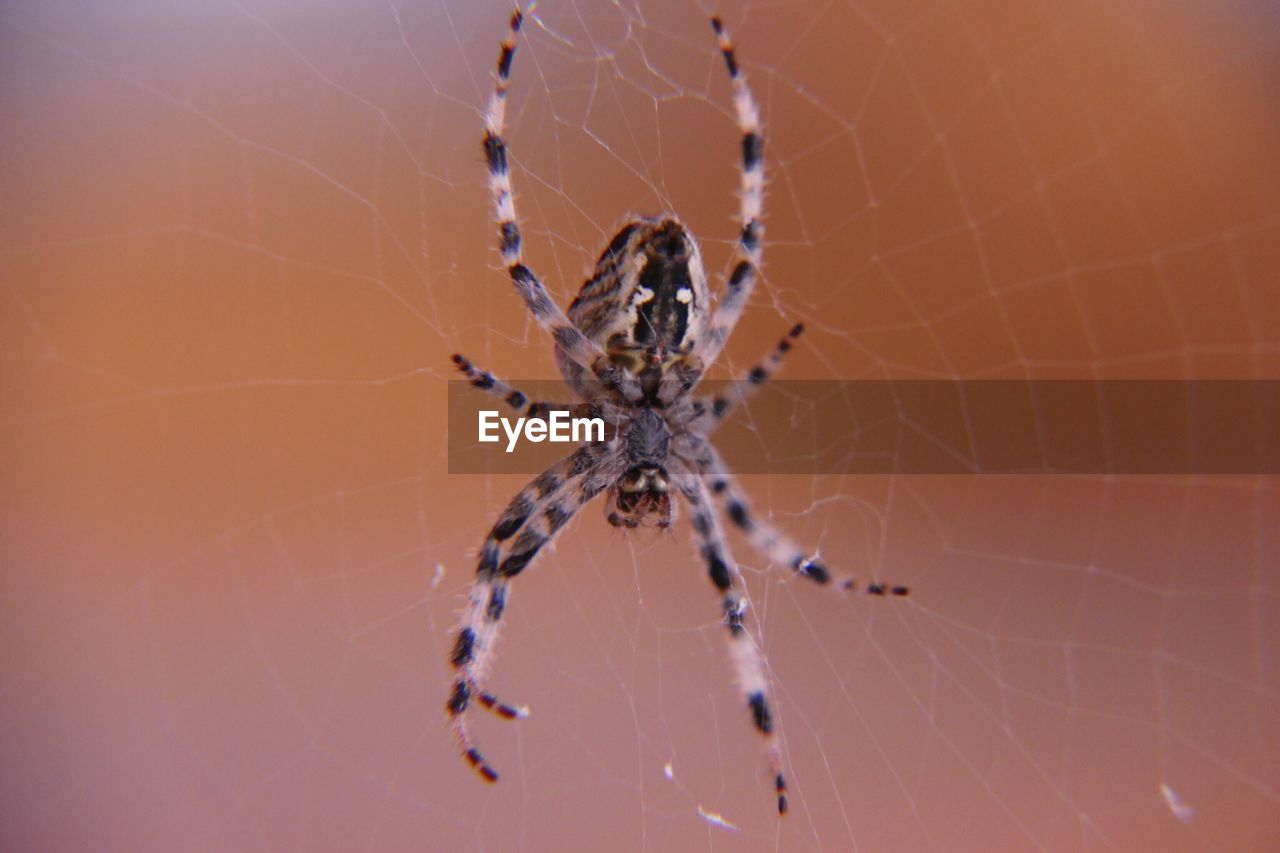 spider web, fragility, arachnid, spider, arthropod, close-up, vulnerability, animal themes, invertebrate, focus on foreground, one animal, animal, animals in the wild, insect, animal wildlife, nature, day, no people, animal body part, outdoors, animal leg, web, complexity