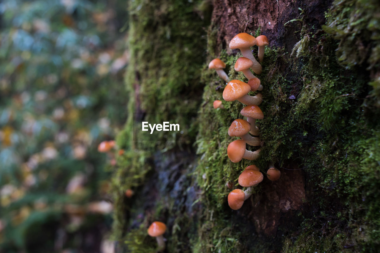 mushroom, fungus, tree, growth, tree trunk, toadstool, moss, nature, growing, fly agaric, no people, lichen, day, outdoors, beauty in nature, focus on foreground, vegetable, close-up, fragility, freshness, fly agaric mushroom