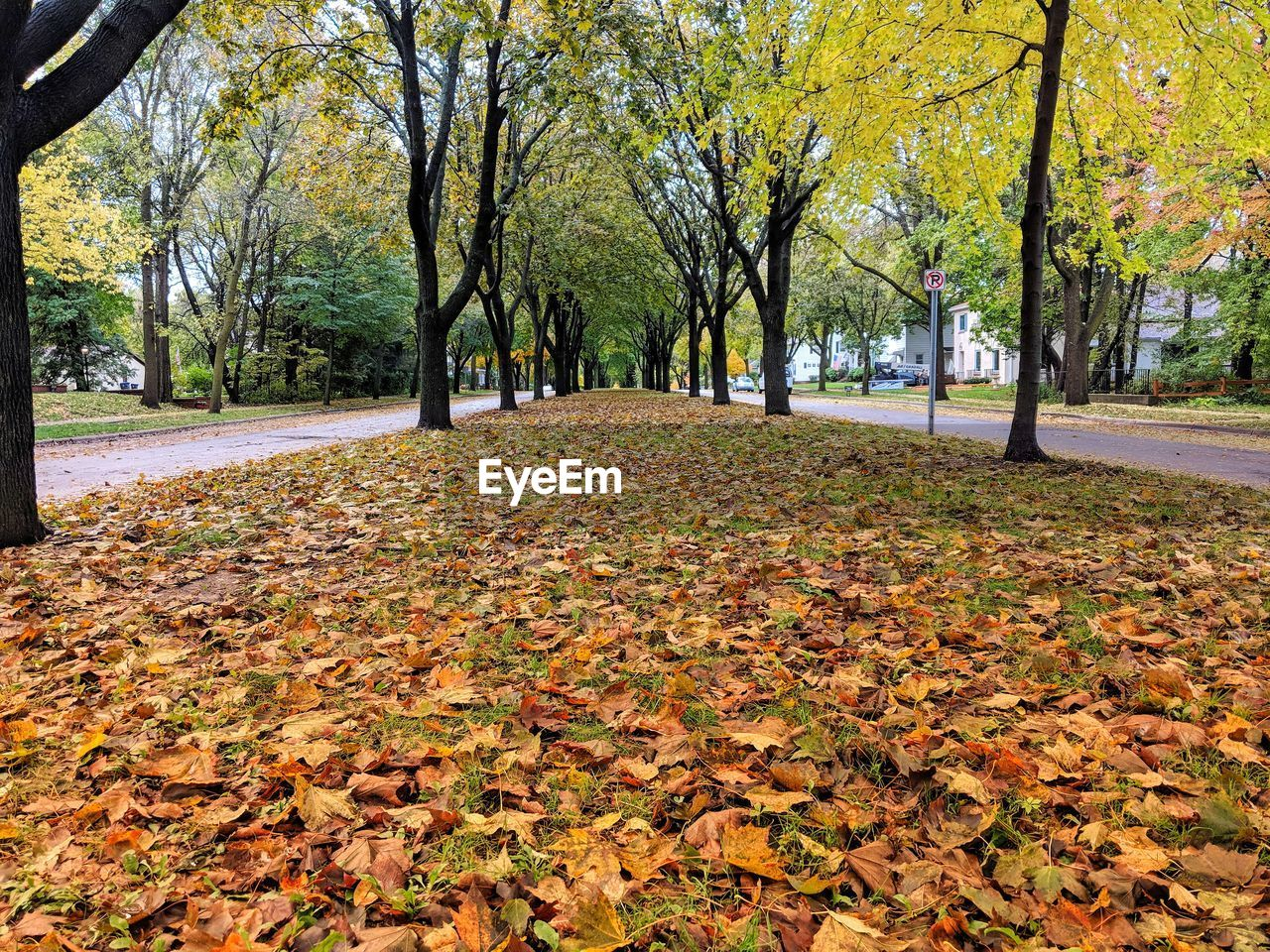 autumn, tree, plant part, leaf, change, plant, park, beauty in nature, falling, nature, tranquility, park - man made space, day, growth, tranquil scene, tree trunk, leaves, trunk, scenics - nature, no people, outdoors, fall, autumn collection, natural condition, treelined