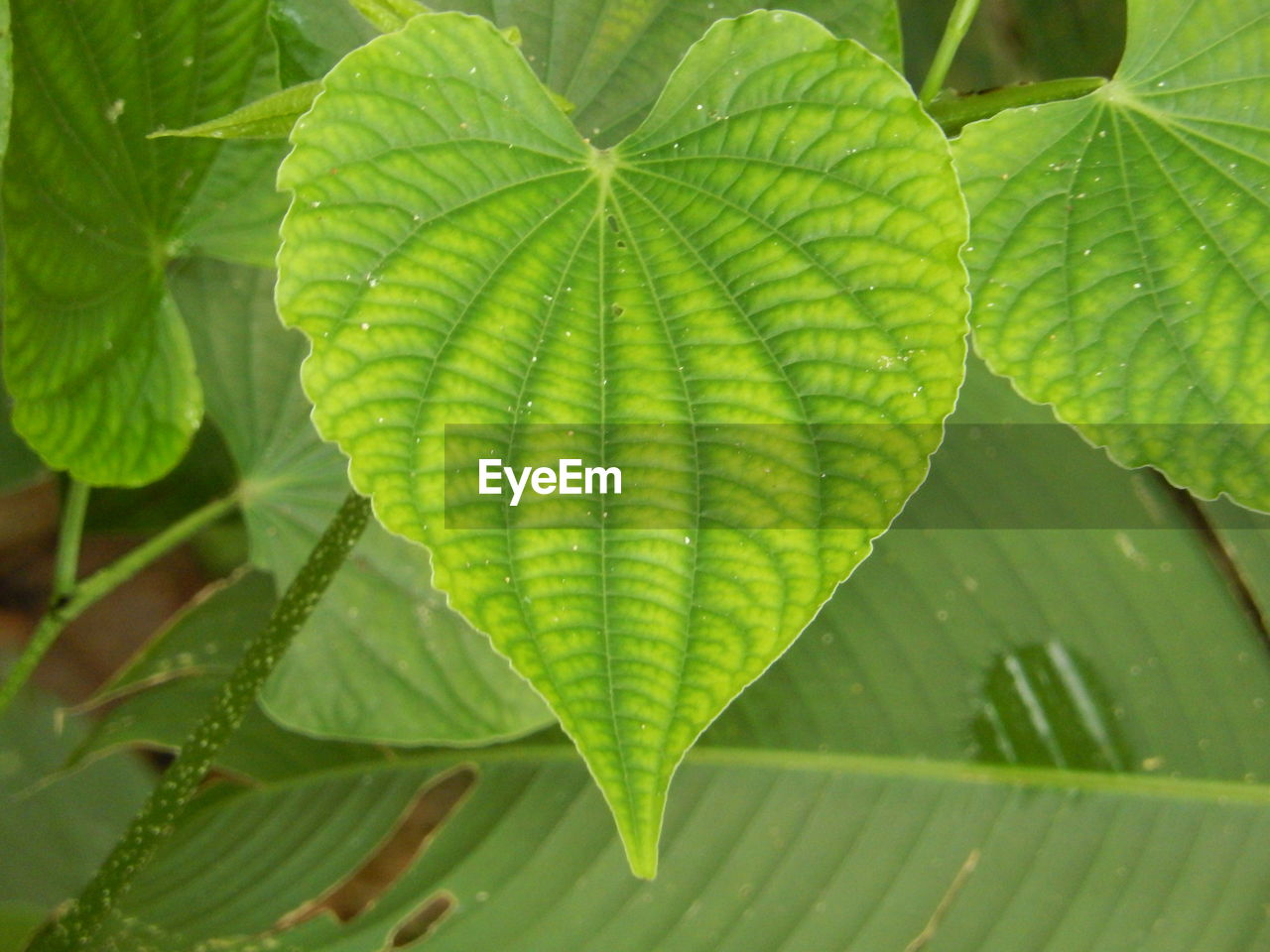 leaf, green color, nature, close-up, plant, growth, fragility, freshness, day, beauty in nature, outdoors, no people