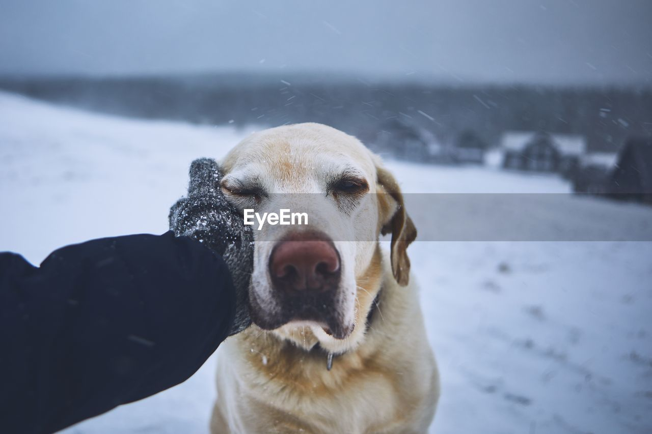 domestic animals, dog, canine, domestic, pets, mammal, one animal, snow, winter, cold temperature, vertebrate, portrait, focus on foreground, looking at camera, nature, close-up, people, mouth open