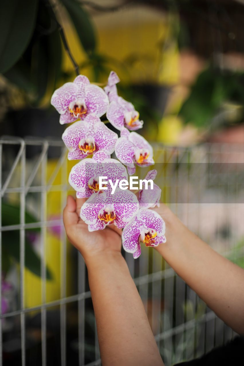 hand, human hand, real people, one person, holding, flower, human body part, flowering plant, focus on foreground, day, freshness, vulnerability, close-up, lifestyles, fragility, plant, pink color, women, leisure activity, outdoors, purple, finger, flower head