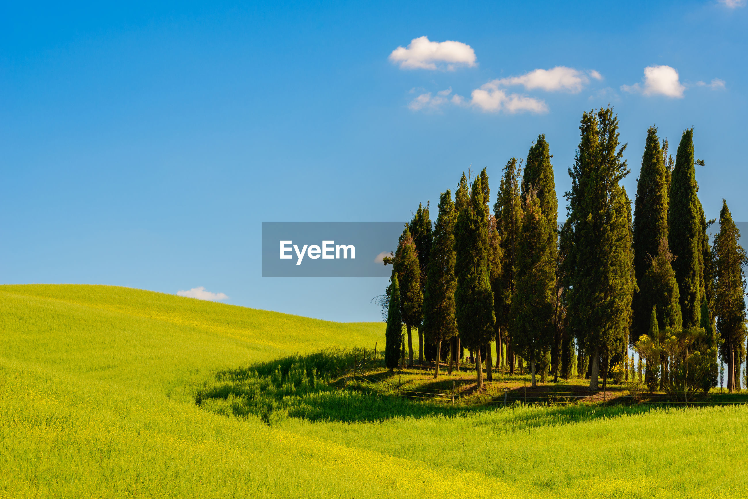 SCENIC VIEW OF GREEN FIELD AGAINST SKY