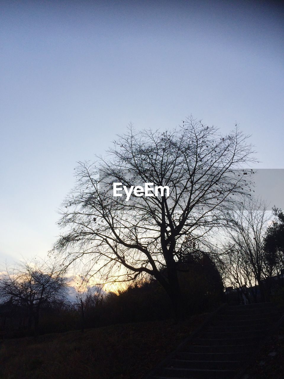 SILHOUETTE OF BARE TREES AGAINST CLEAR SKY