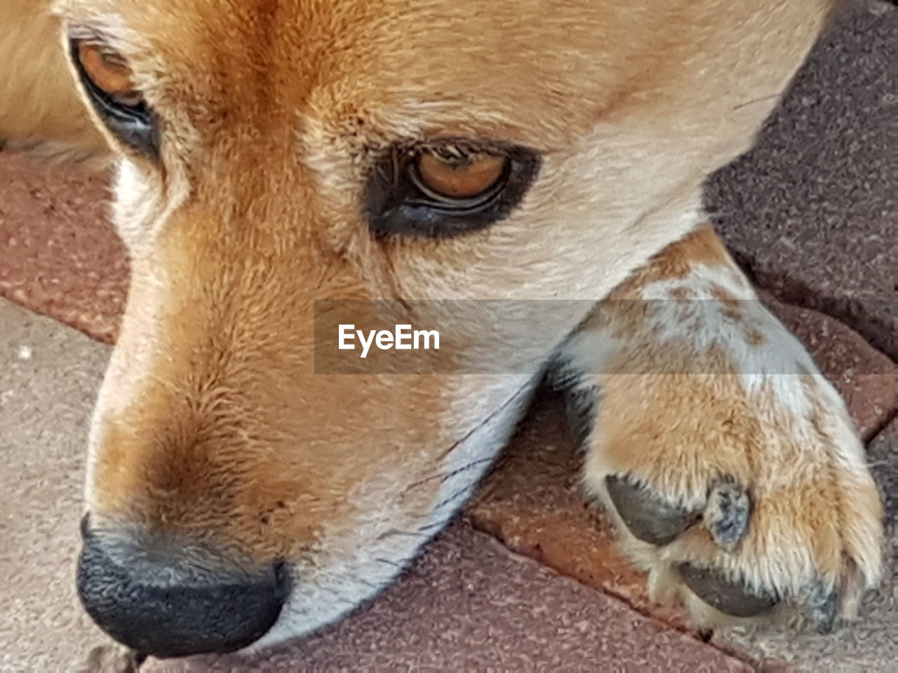 one animal, dog, pets, domestic animals, animal themes, mammal, close-up, no people, high angle view, day, portrait, outdoors