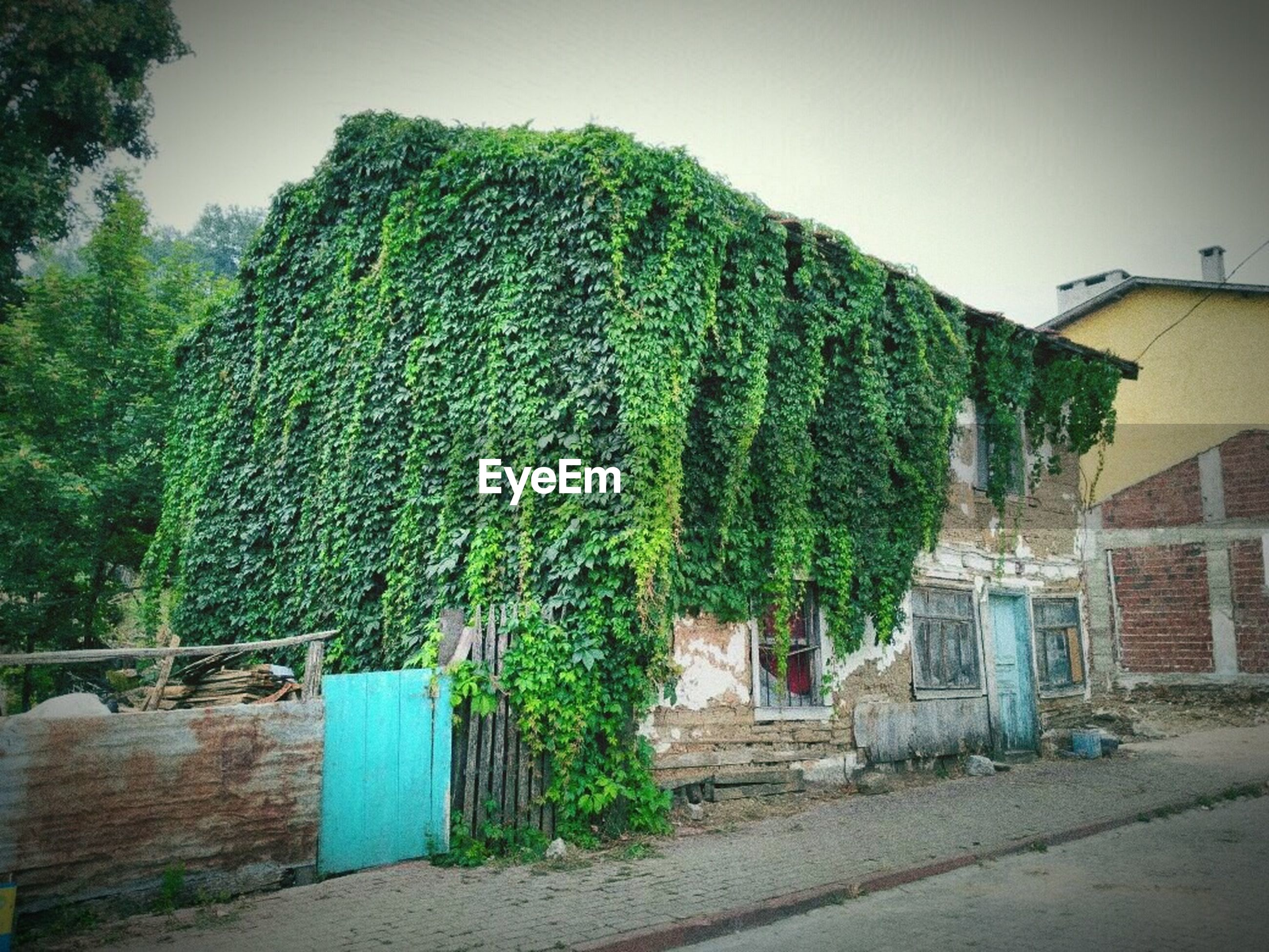 tree, plant, built structure, architecture, nature, building exterior, house, building, day, sky, no people, growth, green color, outdoors, residential district, ivy, absence, footpath, city