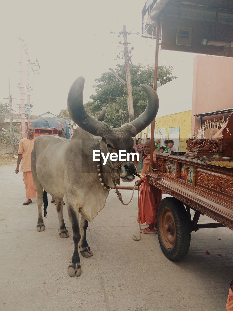 transportation, animal themes, mode of transport, street, land vehicle, one animal, bull, outdoors, mammal, day, built structure, stationary, standing, real people, architecture, building exterior, domestic animals, city