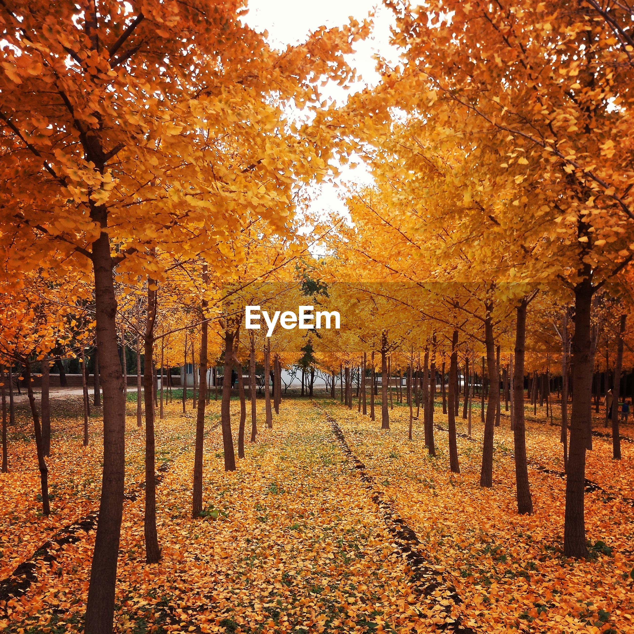 autumn, tree, change, season, tranquility, leaf, orange color, nature, beauty in nature, tranquil scene, scenics, fallen, growth, park - man made space, tree trunk, branch, yellow, landscape, outdoors, day