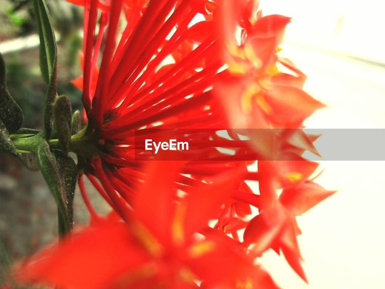 flower, petal, growth, fragility, beauty in nature, flower head, red, freshness, nature, plant, close-up, selective focus, no people, day, blooming, springtime, outdoors, stamen, water, hibiscus