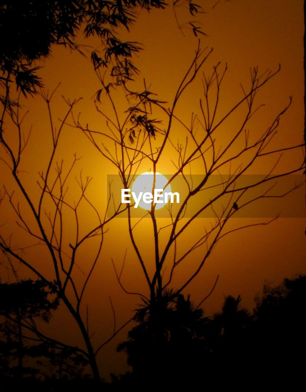 sunset, sky, beauty in nature, silhouette, orange color, scenics - nature, plant, tranquility, tranquil scene, sun, tree, idyllic, nature, no people, outdoors, sunlight, growth, non-urban scene, majestic, yellow, romantic sky