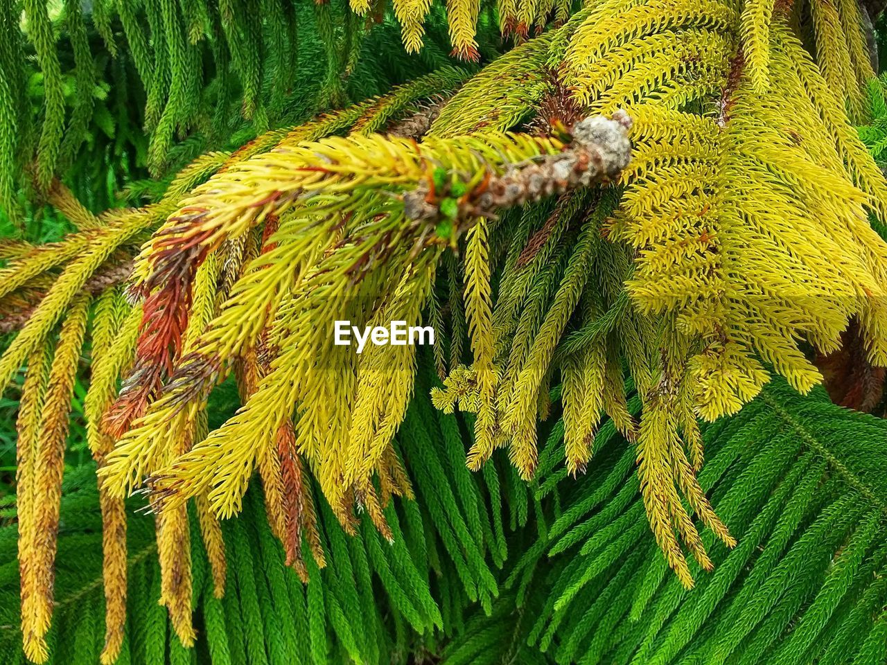 green color, close-up, growth, plant, no people, day, beauty in nature, nature, leaf, plant part, yellow, high angle view, outdoors, rope, pattern, freshness, focus on foreground, full frame, tree, fern