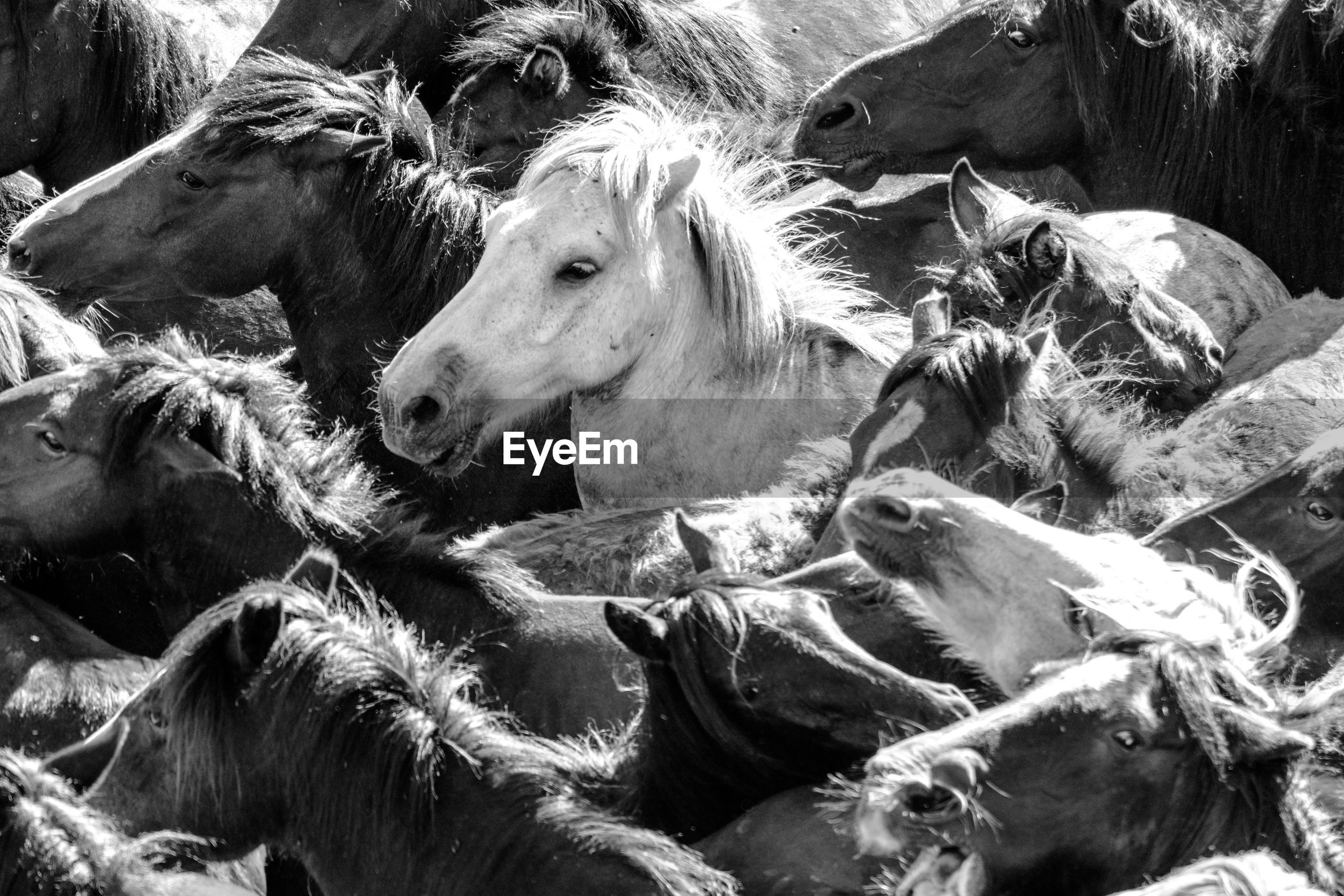 High angle view of horses