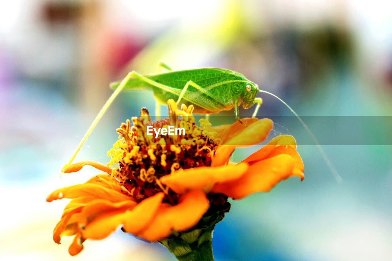 flower, nature, beauty in nature, petal, insect, animals in the wild, animal themes, freshness, fragility, one animal, plant, growth, close-up, outdoors, flower head, day, leaf, focus on foreground, animal wildlife, yellow, no people, sky