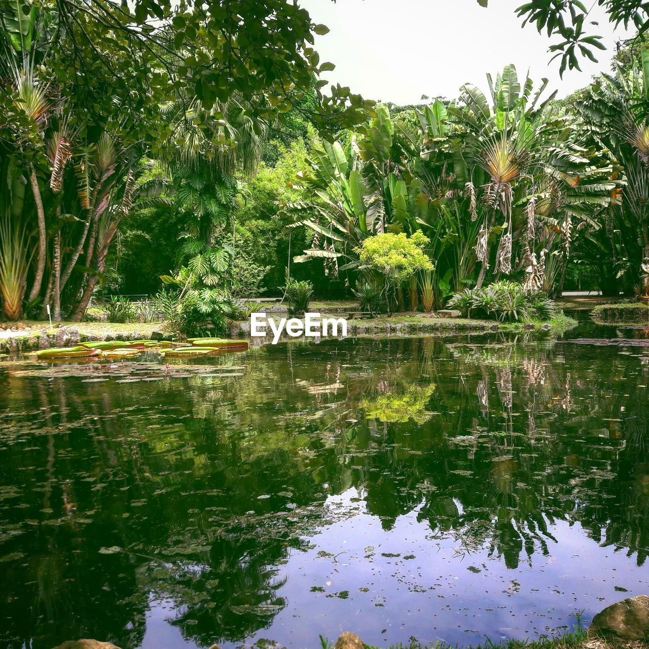 reflection, tree, palm tree, water, nature, no people, outdoors, growth, day
