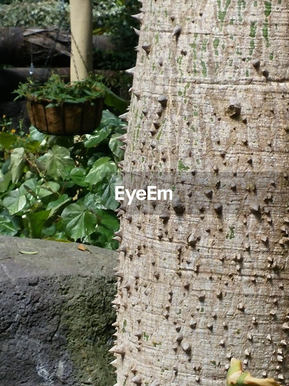 growth, outdoors, plant, day, no people, nature, leaf, tree trunk, tree, close-up, food, beauty in nature, freshness