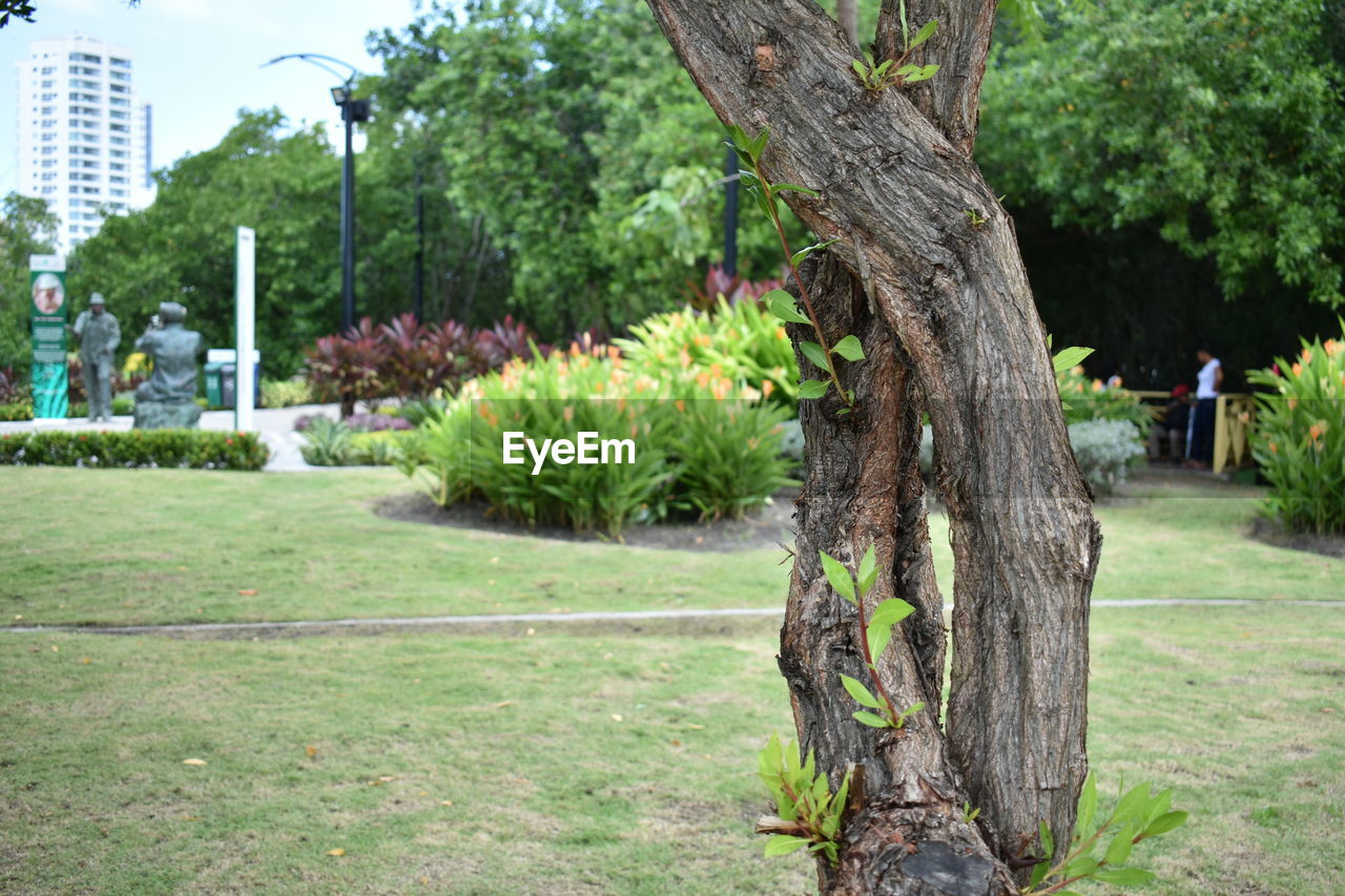 tree, tree trunk, growth, outdoors, day, grass, nature, no people