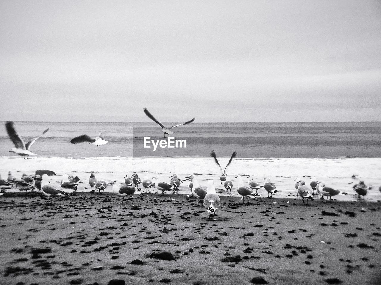 Flock Of Birds At Coast