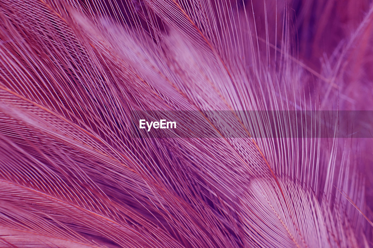 pink color, full frame, backgrounds, pattern, close-up, textile, no people, thread, selective focus, vulnerability, purple, textile industry, indoors, softness, fragility, textured, nature, beauty in nature, still life, abstract, lightweight