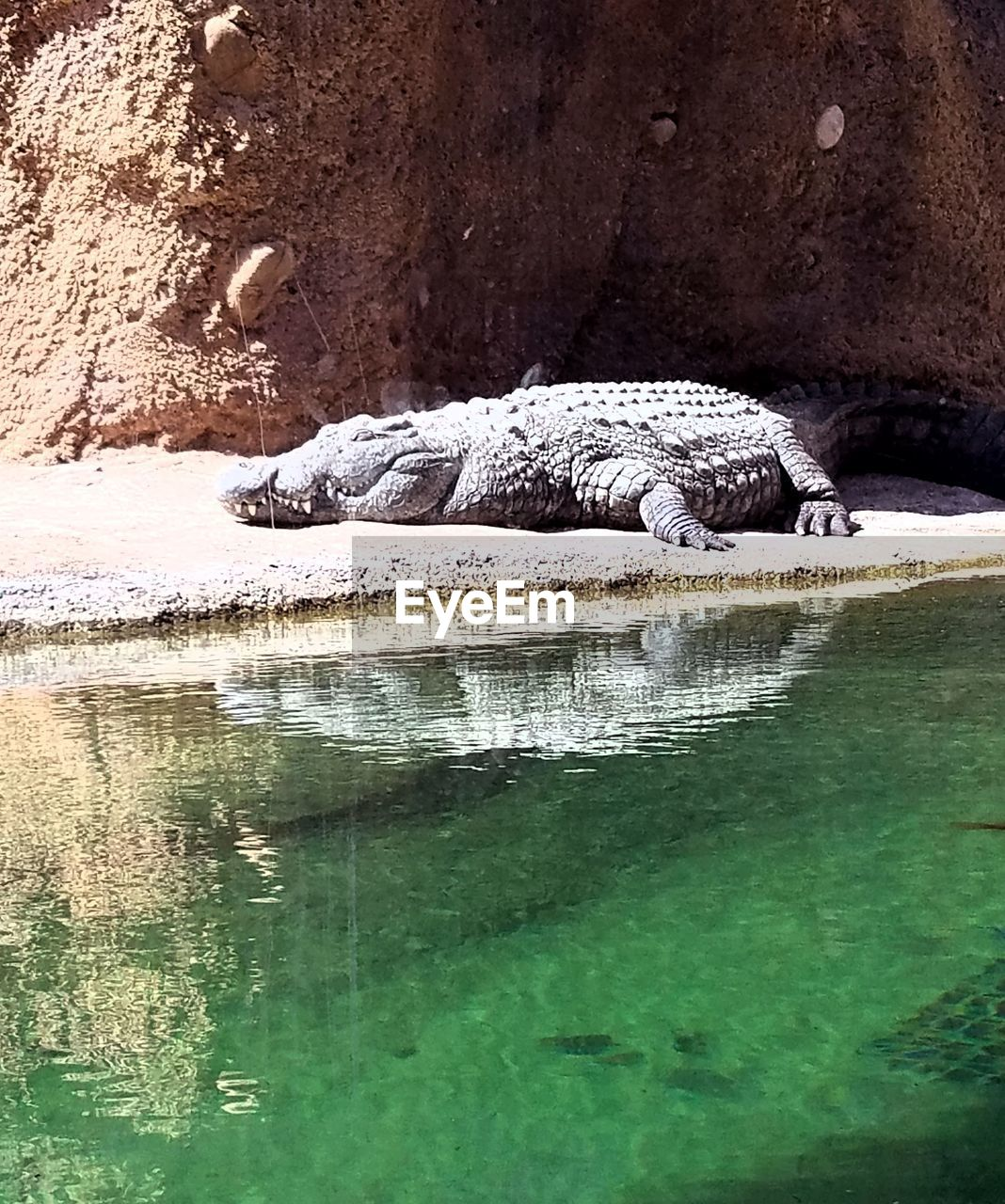 reptile, one animal, animals in the wild, crocodile, animal themes, animal wildlife, water, alligator, nature, day, no people, outdoors, beauty in nature, mammal