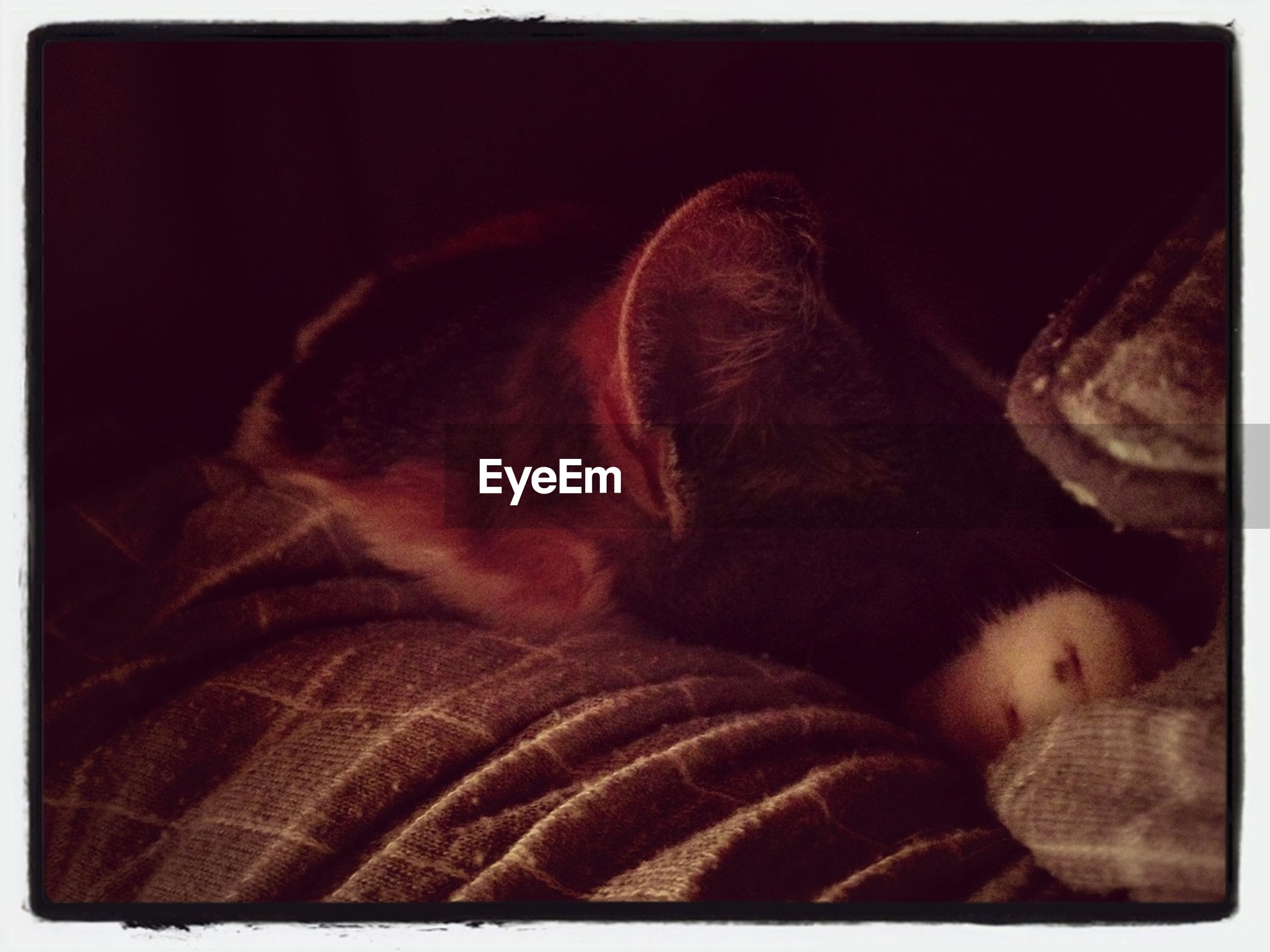 indoors, transfer print, pets, auto post production filter, one animal, relaxation, domestic animals, animal themes, sleeping, bed, resting, mammal, domestic cat, close-up, cat, home interior, sofa, lying down, comfortable, eyes closed