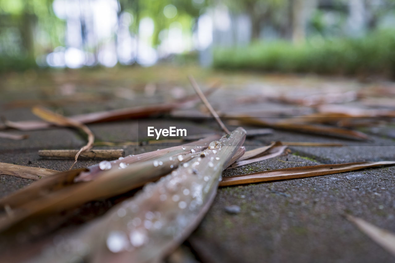 selective focus, close-up, no people, day, wet, wood - material, plant part, nature, leaf, water, plant, outdoors, dry, drop, tranquility, leaves, land, beauty in nature, still life, surface level