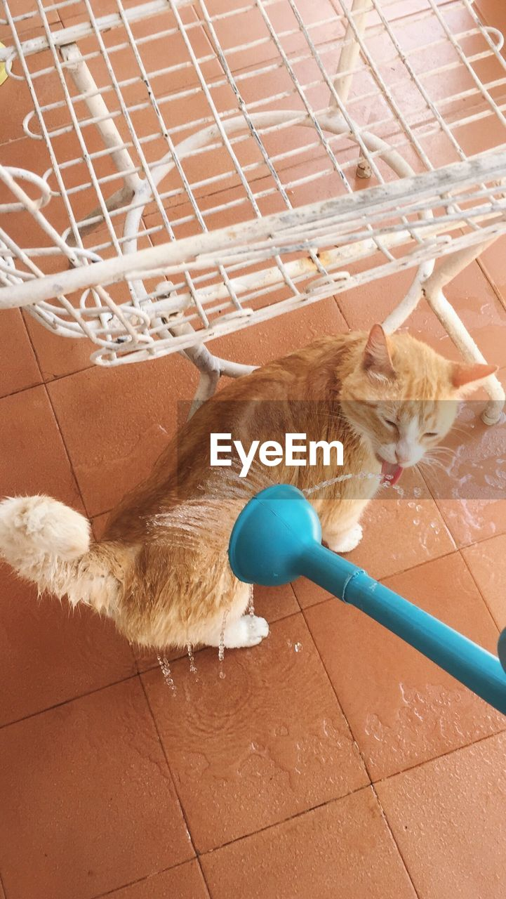 pets, domestic animals, domestic cat, mammal, animal themes, one animal, high angle view, indoors, feline, no people, cleaning, day